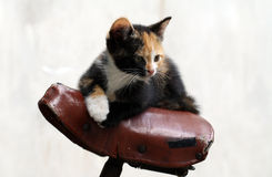 Kitten in bycicle Stock Photography