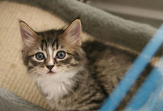 Kitten in a cage. Tiny tabby kitten in a cage looking up through the open door stock photography