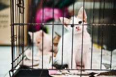 Kitten in cage. View of a kitten in cage looking out Royalty Free Stock Photo