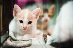 Kitten in cage Royalty Free Stock Images