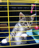Kitten in cage. Royalty Free Stock Photo
