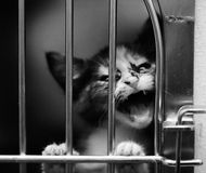 Kitten in a cage crying. Small kitten in a cage meowing. Black and white image stock image