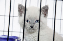 Kitten in a cage Stock Photo