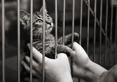 Kitten in a cage looking up. Tabby kitten in a cage looking up from behind the bars of his cage stock photos