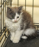 Kitten in a cage at shelter Stock Images