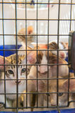 Kitten in cage Stock Photos