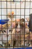 Kitten in cage Stock Photos