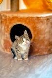 Котенок вышел из домика и ему страш Stock Photos