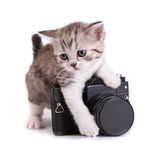 Kitten and the camera Stock Photo