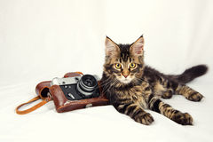 Kitten camera Royalty Free Stock Images