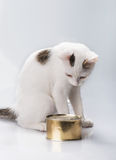 Kitten with canned Stock Images