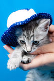 Kitten in a cap Royalty Free Stock Photo