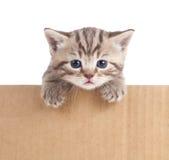 Kitten in cardboard box Royalty Free Stock Image