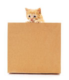 Kitten and cardboard. Royalty Free Stock Images