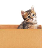 Kitten and cardboard. Royalty Free Stock Photos