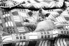Kitten on the carpet Royalty Free Stock Photography