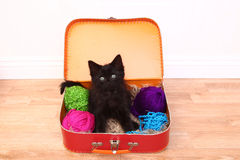 Kitten in a Case Filled with Yarn royalty free stock photo