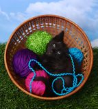 Kitten in a Case Filled with Yarn Royalty Free Stock Photos