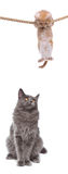 Kitten and cat Royalty Free Stock Images