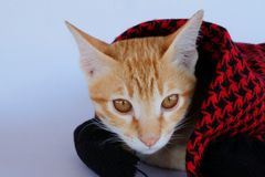Kitten. Cat face. Royalty Free Stock Photography