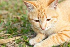 Kitten cat on green grass. Stock Image
