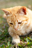 Kitten cat on green grass. Royalty Free Stock Images