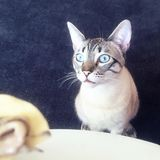 Blue eyes stock images