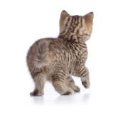 Kitten or cat rear back view isolated Royalty Free Stock Photos