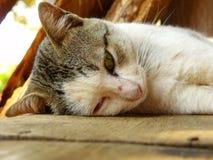 Kitten cat sleeping on the wood floor Royalty Free Stock Photography