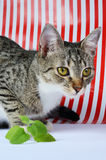 Kitten and catnip stock images