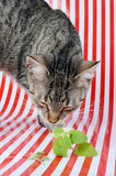 Kitten and catnip Stock Photo