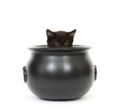 Kitten in a cauldron Stock Photo