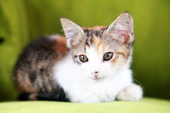 Kitten on chair royalty free stock image