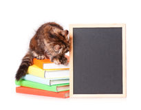 Kitten with chalkboard Stock Image