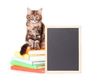 Kitten with chalkboard Stock Photography