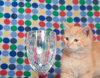 Kitten and champaign glass Stock Photos