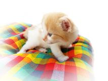 Kitten on checkered blanket Stock Photos