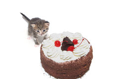 Kitten and a Cherry Cake Stock Images
