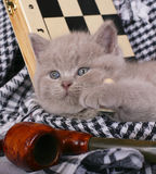 Kitten with chess and pipe Royalty Free Stock Photography