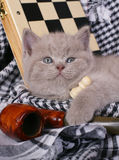 Kitten with chess and pipe Stock Photography