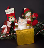 Kitten for christmas Royalty Free Stock Image