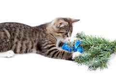 Kitten and Christmas Royalty Free Stock Image