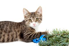 Kitten and Christmas Royalty Free Stock Photography