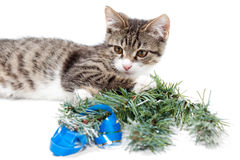 Kitten and Christmas Stock Photo