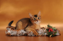 Kitten in Christmas antourage. Somali kitten ruddy color lying in Christmas entourage Royalty Free Stock Images