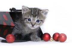 Kitten in a Christmas bag Royalty Free Stock Photo