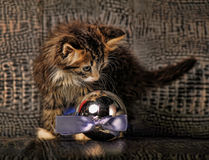 Kitten and christmas ball Stock Photo