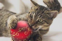Kitten with christmas ball Stock Photos