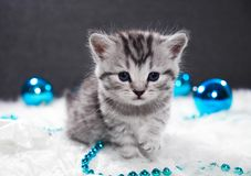 A kitten with Christmas balls. Kitten and new year stock photos