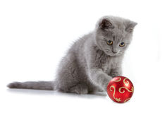 Kitten and christmas bauble Stock Images